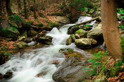 Deep wood. Cascading waterfall in deep forest Stock Images