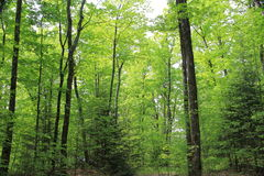 Deep wood forest in summer. Picture was taken at Bon echo provincial park Stock Photos