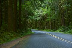 Deep Wood Oregon Road Royalty Free Stock Images