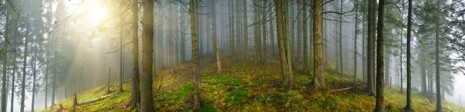 Deep wood panorama Stock Image