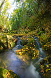 Deep wood river Stock Images