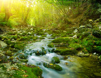 Deep wood river royalty free stock image