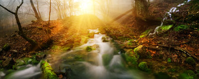 Deep wood river Stock Photography