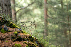 Deep woods. With defocused background Stock Photography