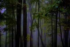 Deep Woods Fog Stock Images