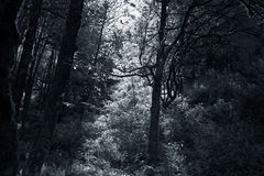 Deep in the woods. Infrared woods from National Park of Peneda Geres, north of Portugal, with beautiful light Royalty Free Stock Image