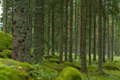 Deep Woods Stock Photos