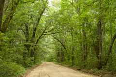 Deep In The Woods. A unpaved country road extending deep into the thick lush summer forest Stock Photo