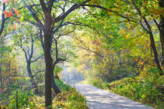 The deepandserene pretty trees _ autumnal scenery Stock Photography