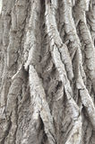 Deeply grooved tree bark Royalty Free Stock Photos