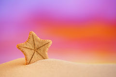 Deepwater rare starfish with ocean, beach and seascape Stock Image