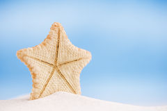 Deepwater rare starfish with ocean , beach and seascape Royalty Free Stock Photo