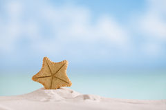 Deepwater rare starfish with ocean , beach and seascape Stock Photography