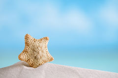 Deepwater rare starfish with ocean , beach and seascape. Shallow dof Royalty Free Stock Image