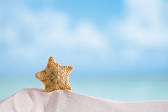 Deepwater rare starfish with ocean , beach and seascape Stock Photos