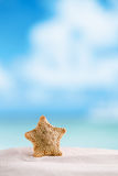 Deepwater rare starfish with ocean , beach and seascape Royalty Free Stock Photos