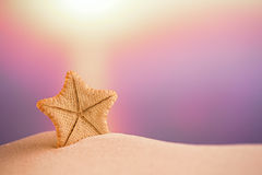 Deepwater rare starfish with ocean , beach and seascape Stock Image