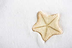 Deepwater rare starfish in white beach sand Stock Photography