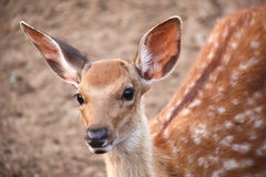 Deer Stock Images