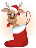 Deer. In the Santa shoe Royalty Free Stock Image