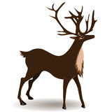 Deer. Isolated on white background Stock Photos