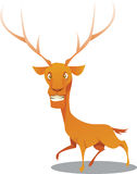 Deer. Vector illustration of cute deer Stock Photos