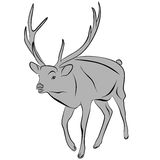 Deer. An a vector illustration of Deer . Files included: Illustrator 8 EPS and JPG Royalty Free Illustration