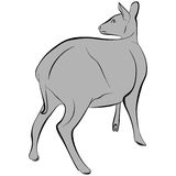 Deer. An a vector illustration of Deer . Files included: Illustrator 8 EPS  and JPG Stock Illustration