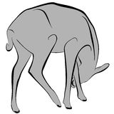 Deer. An a vector illustration of Deer . Files included: Illustrator 8 EPS  and JPG Vector Illustration