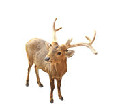Deer. Isolated over white background stock image