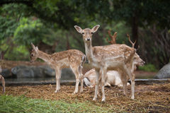 Free Deer Stock Photos - 33858653