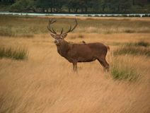 Deer. And bird in a park royalty free stock photo