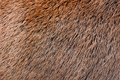 Deer abstract background fur Stock Image