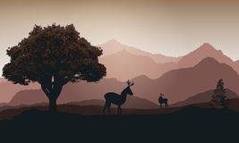 Deer against the background of the mountains at sunset Royalty Free Stock Images