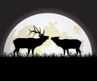 Deer against the Moon Royalty Free Stock Image