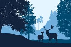 Deer And Hind Standing Among Trees In Landscape With Hill Under Royalty Free Stock Image