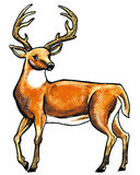 Deer animal Stock Images