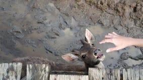 Deer animal abuse Stock Photos