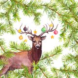 Deer animal with decorative baubles on horns. Christmas watercolor card with pine tree branches stock illustration