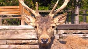 Deer Animal Face in the zoo