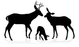 Deer Family Silhouettes. Deer animal family silhouettes fawn, doe and buck stag royalty free illustration