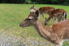 Deer. In animal park Stock Photos