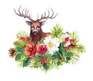 Deer animal, winter flowers, fir tree, mistletoe. Watercolor for christmas card Stock Photography