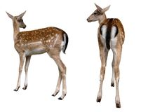 Deer animals. It is isolated royalty free stock images