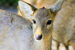 Deer Animals of the Zoo. The zoo is open outdoors Royalty Free Stock Image