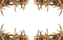 Deer Antler Border. A background / border with whitetail deer antlers dressing the corners royalty free stock photo