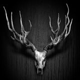Deer Antler hang on Wood Panel. In Black and White stock photo