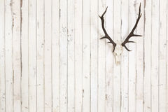 Deer antler on old white wooden wall Stock Photography