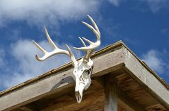 Deer Antlers on Cabin. A beautiful rack of deer antlers are on display on the facia of a cabin royalty free stock images