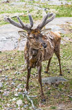Deer with antlers chic Stock Photography